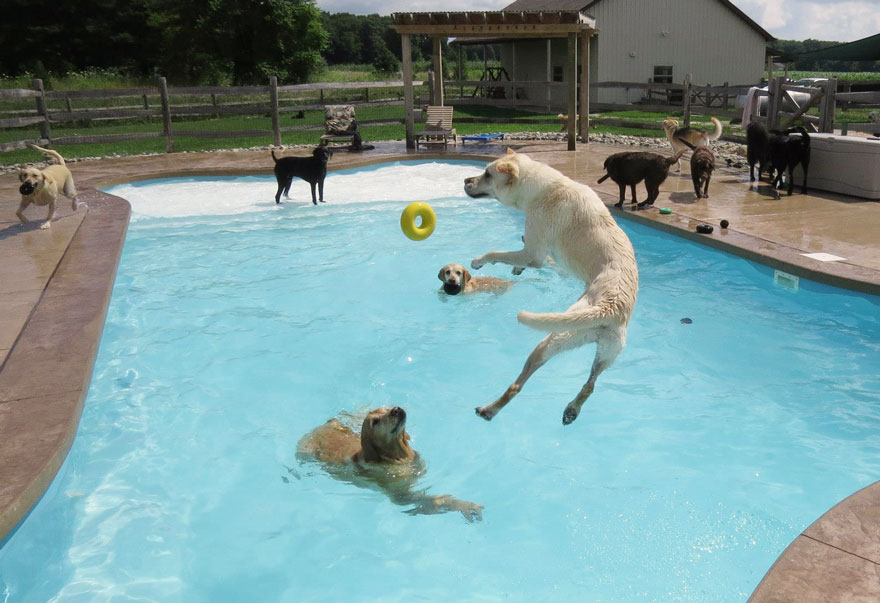 Puppy Pool Party Puppy Pool Party | Puckville